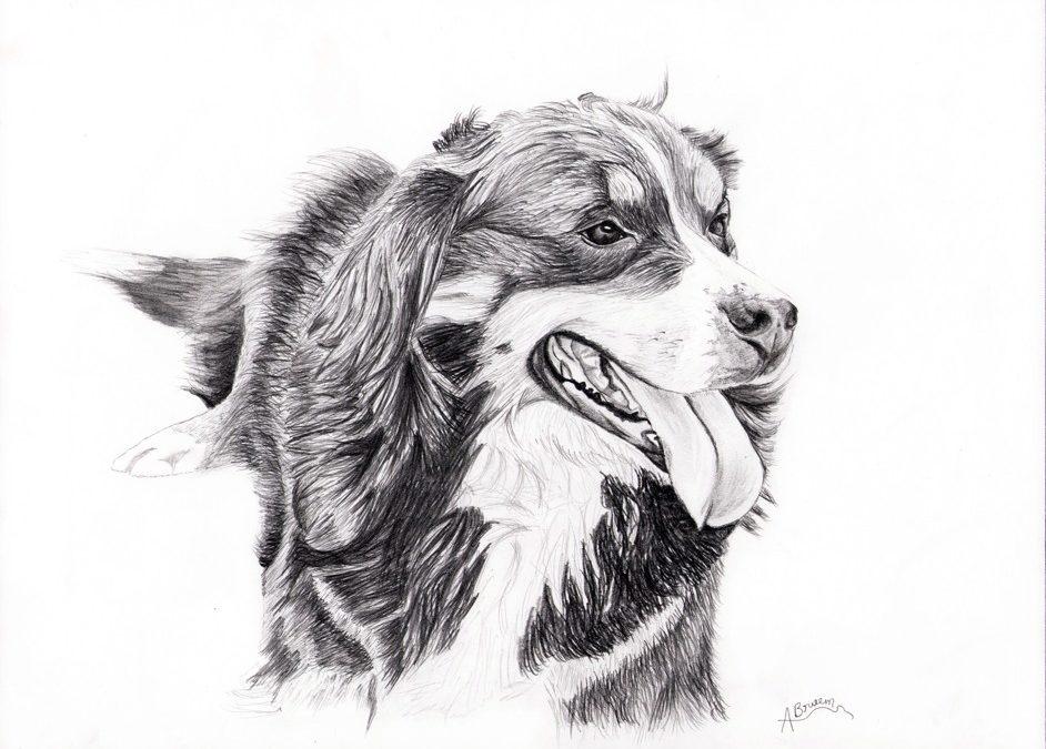 Belle crayon graphite