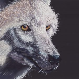 Dessin d'un loup blanc sur fond noir au pastel sec.